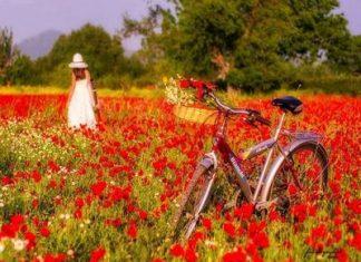 Sezon estival. Plimbare cu bicicleta