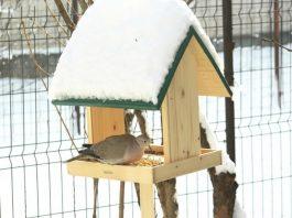 Păsări La Hrănitoare